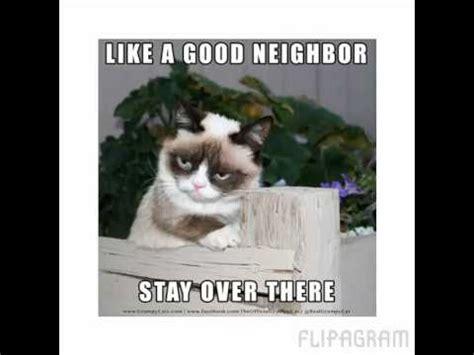 Make Grumpy Cat smile   YouTube