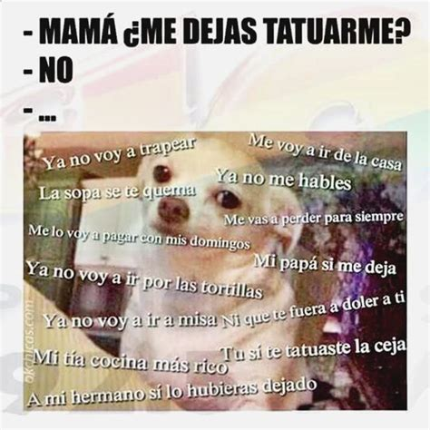 Más de 1000 ideas sobre Imágenes Divertidas De Chihuahuas ...