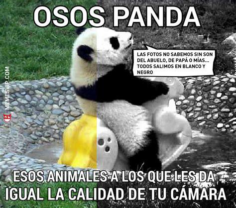 Meme oso panda   memes en español   memesvip.com