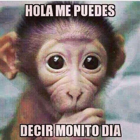 Memes Chistosos De Animales | www.imgkid.com   The Image ...