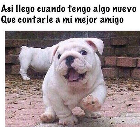 memes, perros, chistes, memes en español   image #3644774 ...