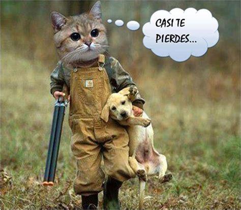 Memes y Gifs Chistosos para Whatsapp | Fondos Wallpappers ...