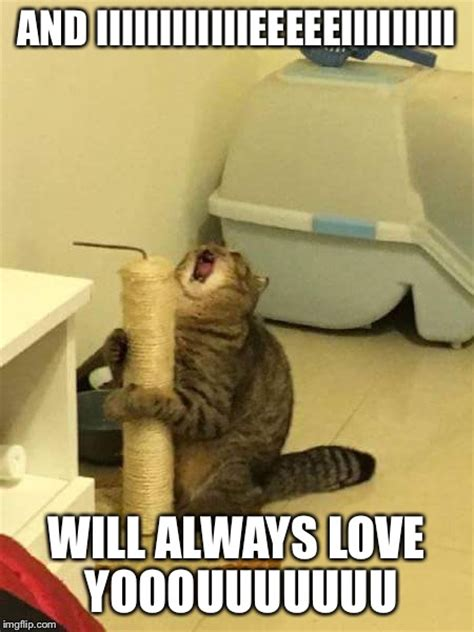 Microphone Cat   I Will Always Love You   Imgflip