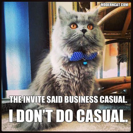 Modern Cat Memes   Modern Cat