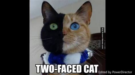 Most Adorable And Funny Cat Memes! So Cute You Will Barf ...