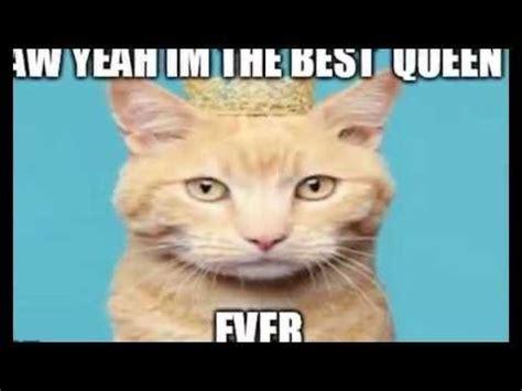 My Cat Meme Slideshow   YouTube