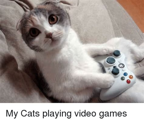 My Cats Playing Video Games | Cats Meme on SIZZLE