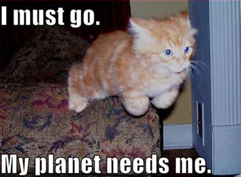 My Favorite Cat Memes   Fimfiction