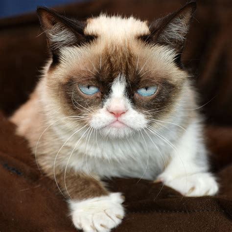 My Grumpy Cat Approach to Socially Responsible Investing ...