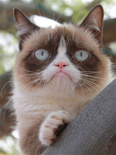 OMG! Internet meme sensation Grumpy Cat to star in family ...