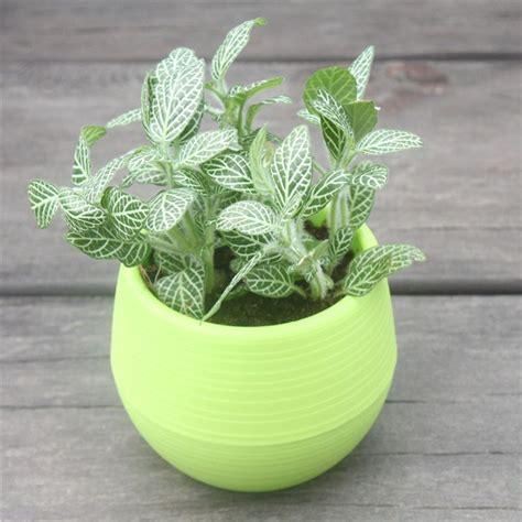Online Get Cheap Plastic Pot Planters  Aliexpress.com ...