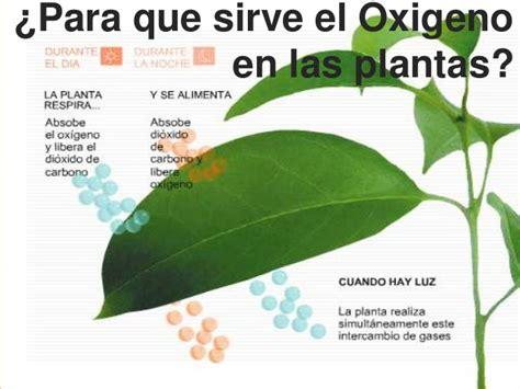 Oxigeno y anegamiento de los suelos..