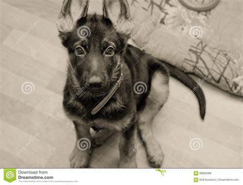 Parasitos en Perros   Como Saber si mi Perro tiene ...