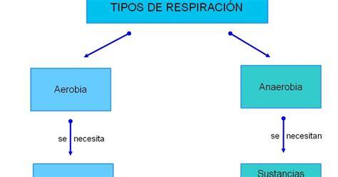 Pedagogía: Comparación entre la respiración aerobia y ...