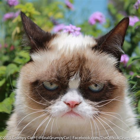 Petition Bring Grumpy Cat to Western Michigan University!