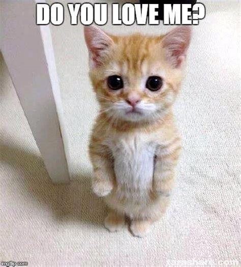 Pics For > Cute Cat Meme I Love You