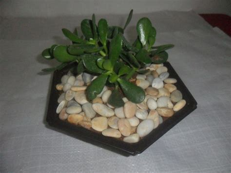 Piedras Blancas Decorativas Para Jardines   Bs. 780.000,00 ...