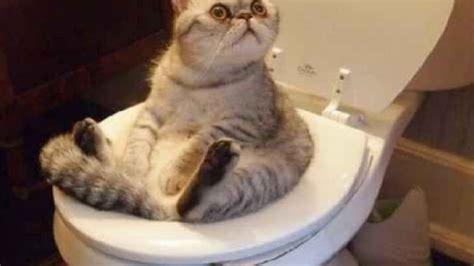 Planeta gato