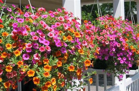 Plantas de Jardin con Flores y sus Nombres