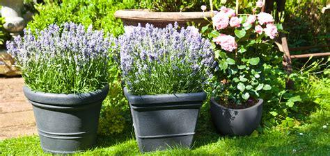 Plantas para patios: vida y color | WESTWING
