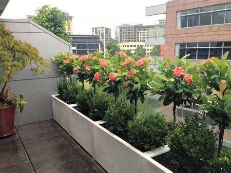 Plantas Para Terraza Con Mucho Sol   Diseños ...