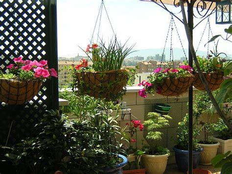 plantas para terrazas con mucho sol | Cuidar de tus ...