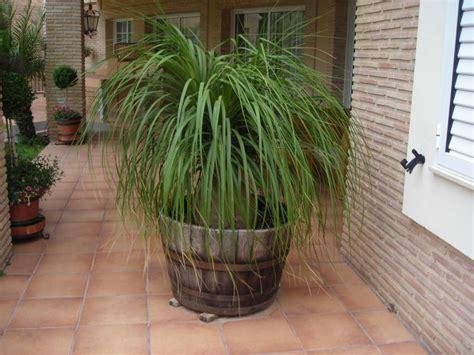 plantas para terrazas con mucho sol | facilisimo.com