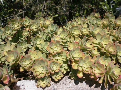 Plantas para terrazas | El rincon verde de plantas y jardines