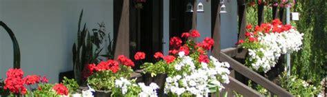 Plantas para terrazas y balcones