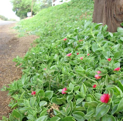 Plantas para un jardín o balcón con mucho sol | El Blog ...