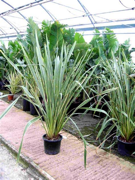 Plantas resistentes al sol y viento para terrazas en Málaga