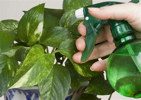 Plante de interior usor de intretinut