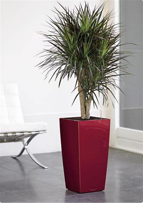 Plante decorative naturale   impactul asupra prafului si a ...