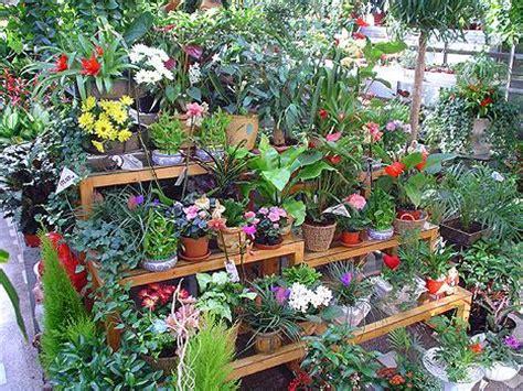 Plante ornamentale de interior   odugarden