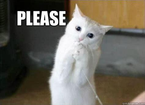 Please   pretty please cat   quickmeme