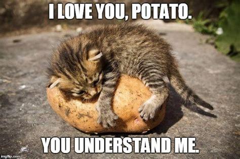 potato cat   Imgflip