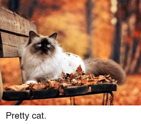 Pretty Cat | Meme on SIZZLE