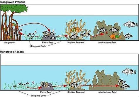¿Qué es un arrecife de coral?   Tendenzias.com