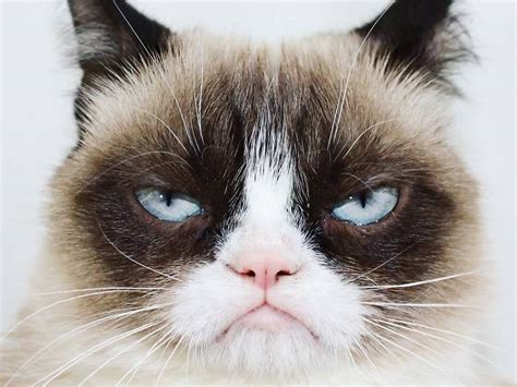 Real cat Grumpy Cat to join the fake cats of Cats on Broadway