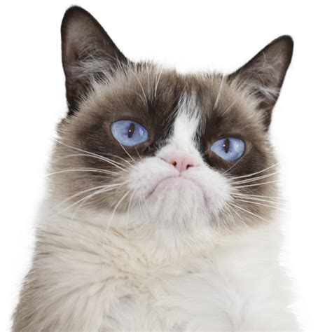 Real Grumpy Cat   YouTube