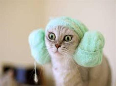 Really funny cat videos