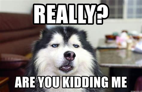 Really? Are you kidding me   sarcasm dog | Meme Generator