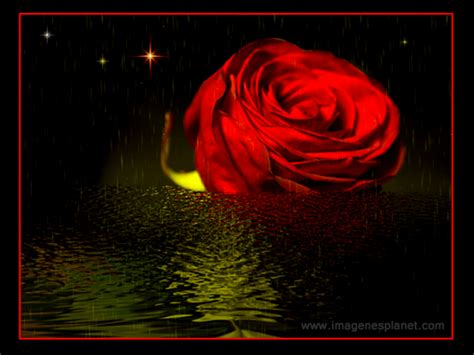 Rosas animadas con movimiento  Roses animated motion ...