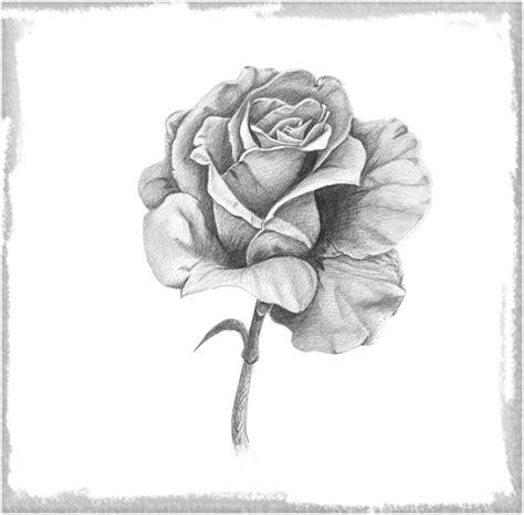 Rosas Para Dibujar A Lapiz Faciles para Dedicar | Dibujos ...