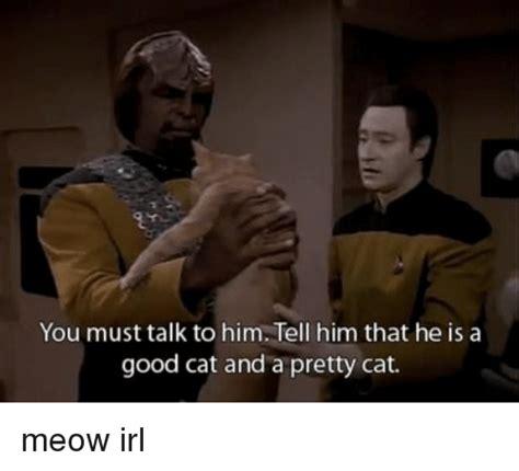 ️ 25+ Best Memes About Pretty Cat | Pretty Cat Memes