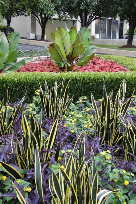 Sansevieria: sus cuidados en interior y en jardines | El ...
