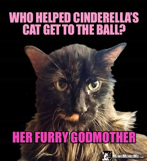 She Cat Jokes, Pretty Kitty Riddles, Funny Cat Memes ...