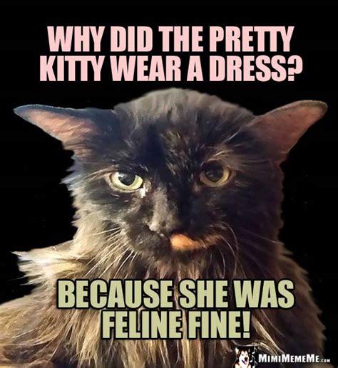 She Cat Jokes, Pretty Kitty Riddles, Funny Cat Memes ...