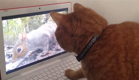 Squirrel Video For Cats To Watch   myyblacas mp3