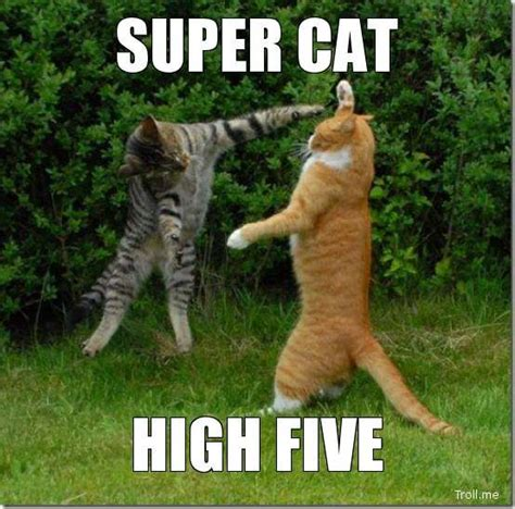super cat high five.jpg  554×548  | memes | Pinterest